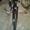 велосипед diamant #801943