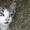 Отдам котят в дар #1285362