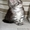 Котята породы Мейн кун. #1452551
