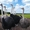Акция Взрослые Африканские страусы 6 лет 11 голов #1642667