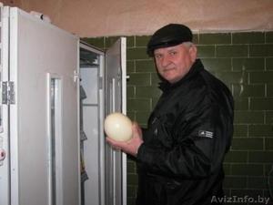 Продаю инкубаторы на 60 и 72 страусиных яйца - Изображение #1, Объявление #1567054
