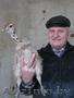 Африканские страусы: цыплята птенцы