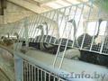 Продаю готовый бизнес страусовая ферма 3186м2 зданий, пруд, - Изображение #3, Объявление #1567074