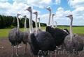 Увлекательная школьная экскурсия на страусиную ферму в Мозыре